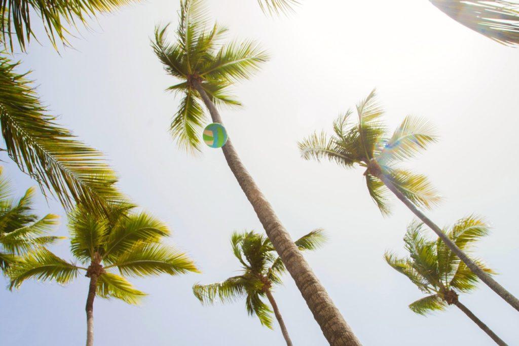 palmy na Dominikánská Republika