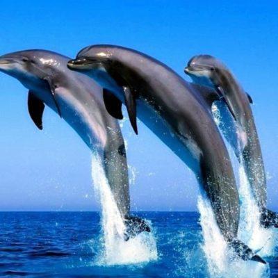 Výhled na delfíny