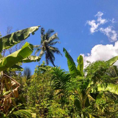 Palmové stromy na Bali