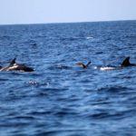 Výhled na delfíny na Tenerife